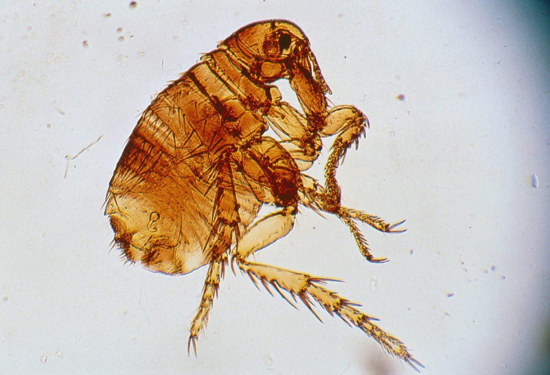 Epizoonosen – Tiere auf der Haut